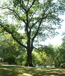 leadership_coaching_tree